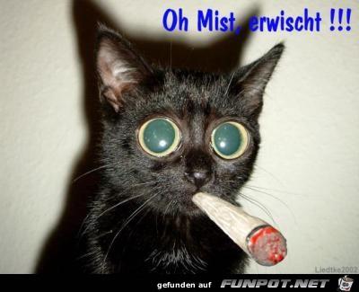 Mist - erwischt!
