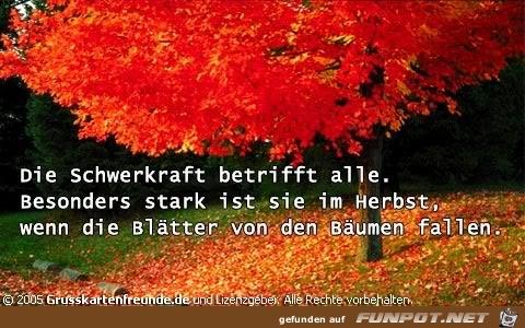 herbst41