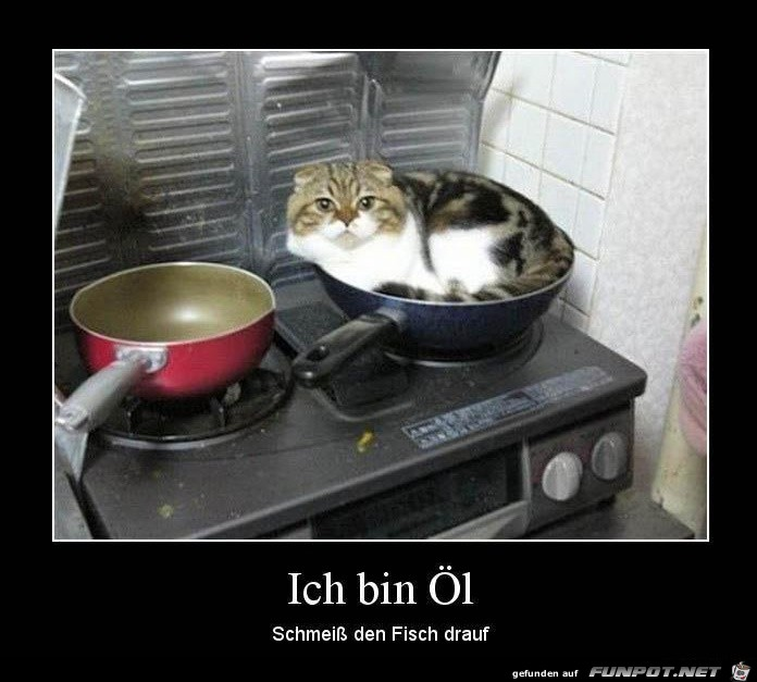 ich bin Öl