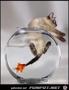 FishRevenge
