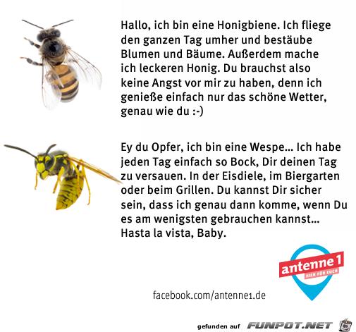 Unterschied Biene und Wespe