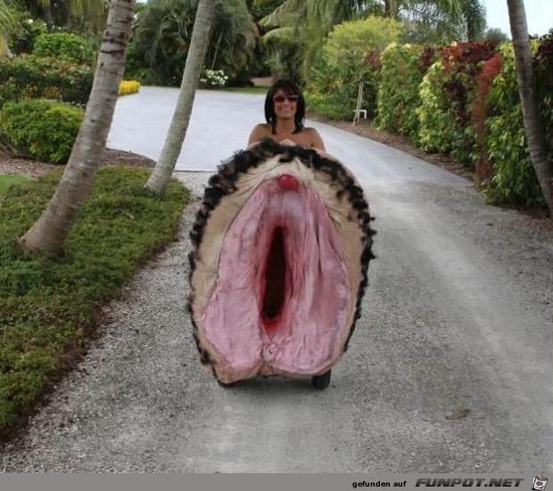 witzige Bilderserie Nr. 4 aus verschiedenen Blogs