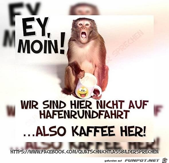 Ey Moin