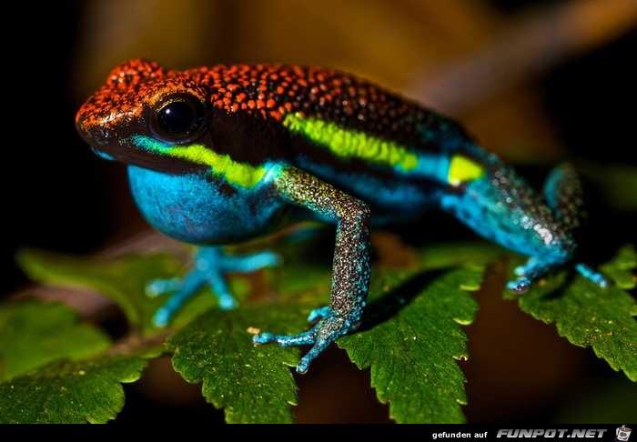 Besonders farbenprächtige Tiere!