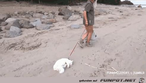 Unterschied zwischen Hunden und Katzen....