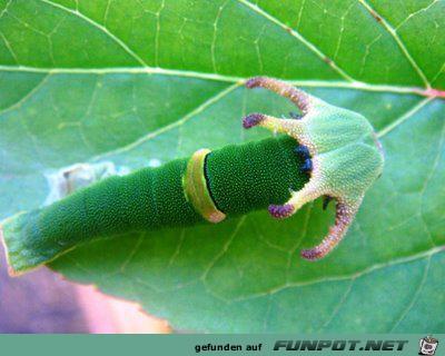 Welt der Insekten