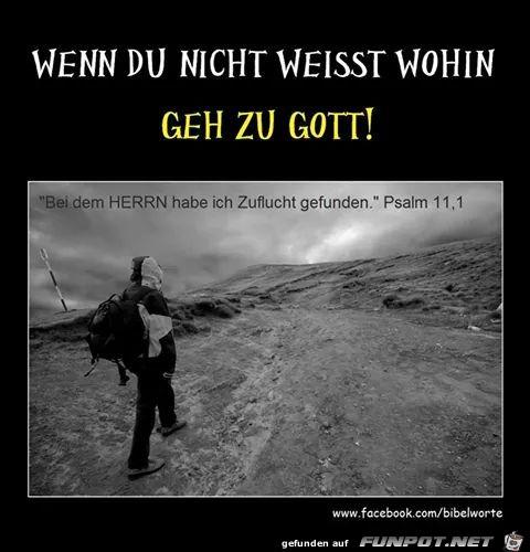 Psalm 11 1