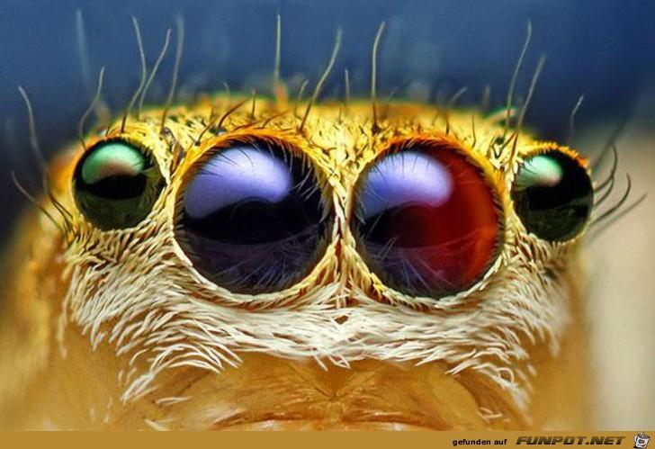 Gigantische Augen-Makro-Aufnahmen!