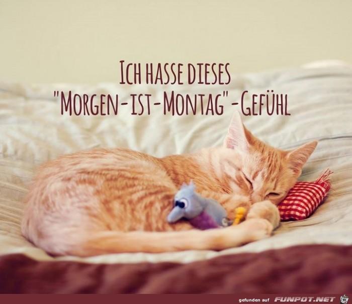 Morgen-ist-montag