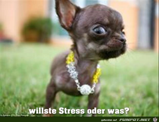 willst'e Stress?