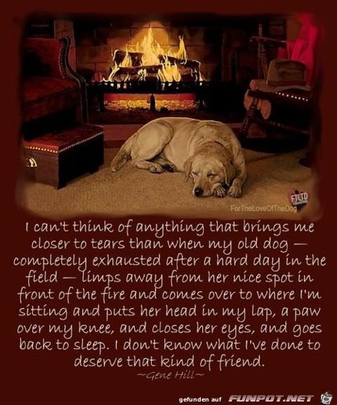 Hunde-Gedanken auf Englisch. Sehr lieb.