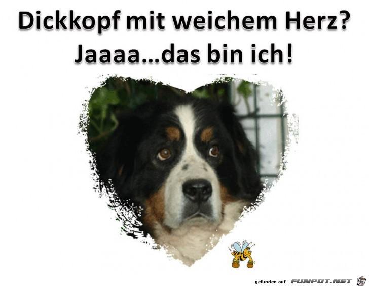 Dickkopf