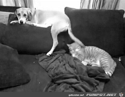 Difference Between Dogs and Cats 16