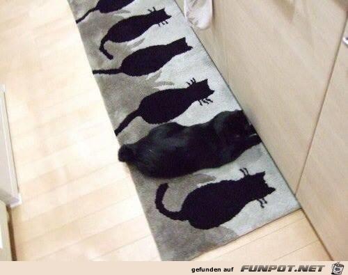 wo ist die katze