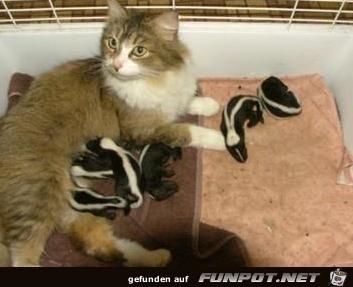 witzige Bilderserie Nr. 2 - Katzen