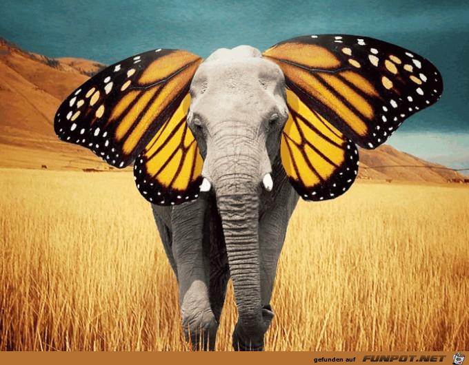 Schmetterlingselefant