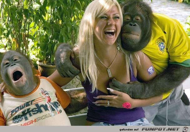 Neugierige Affen