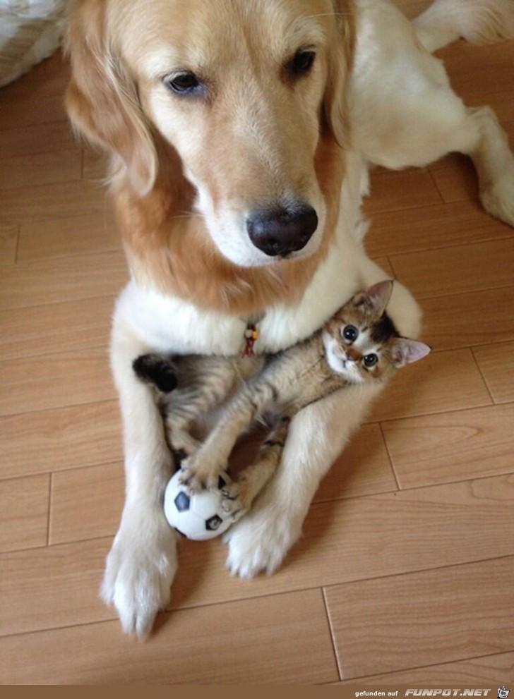 hunde und katzen  tolle freundschaft 8