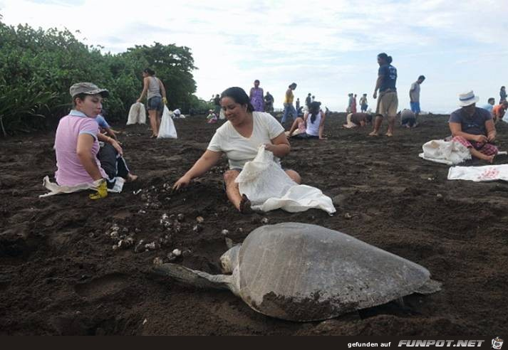 Meeresschildkröten vs. Der Mensch