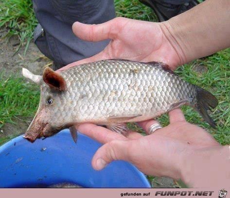 Schweinefleisch im Fisch