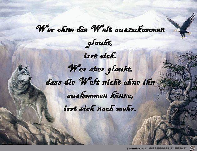 Wolf sprüche WolfQuest APK