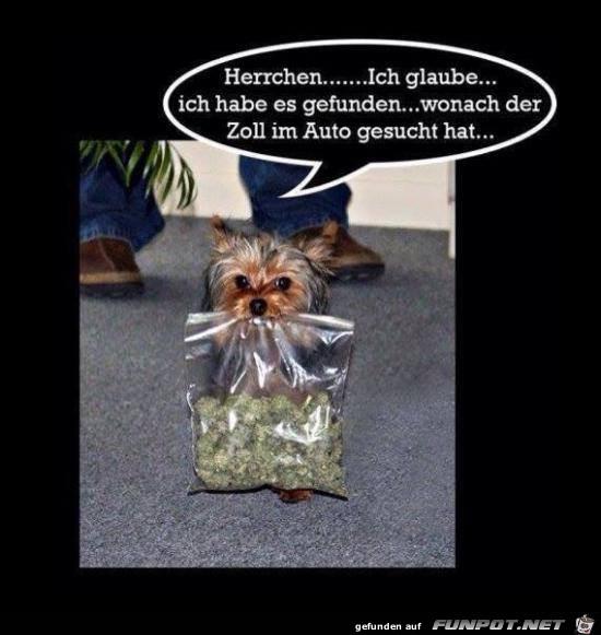 Herrchen
