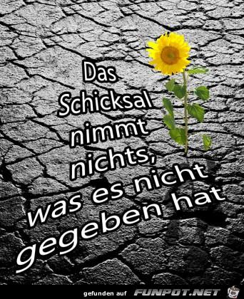 schicksal-342x400