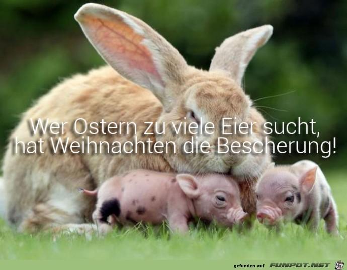 Wer-zu-Ostern.jpg auf www.funpot.net
