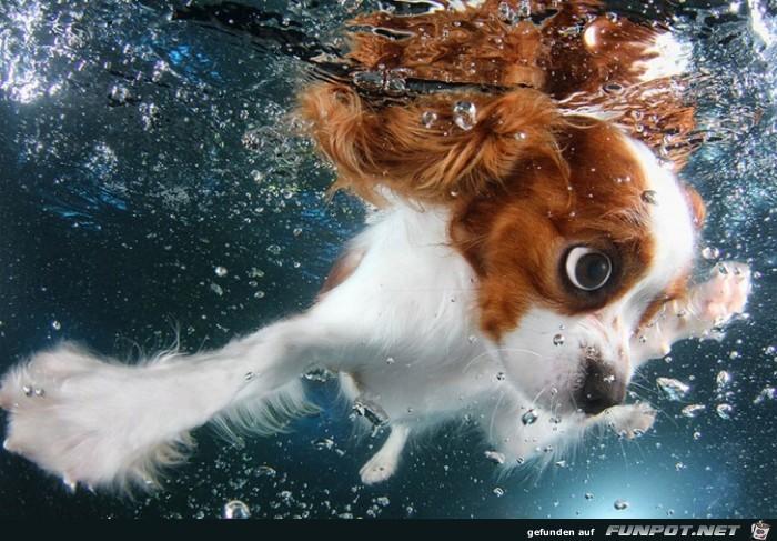 Welpen unter Wasser!
