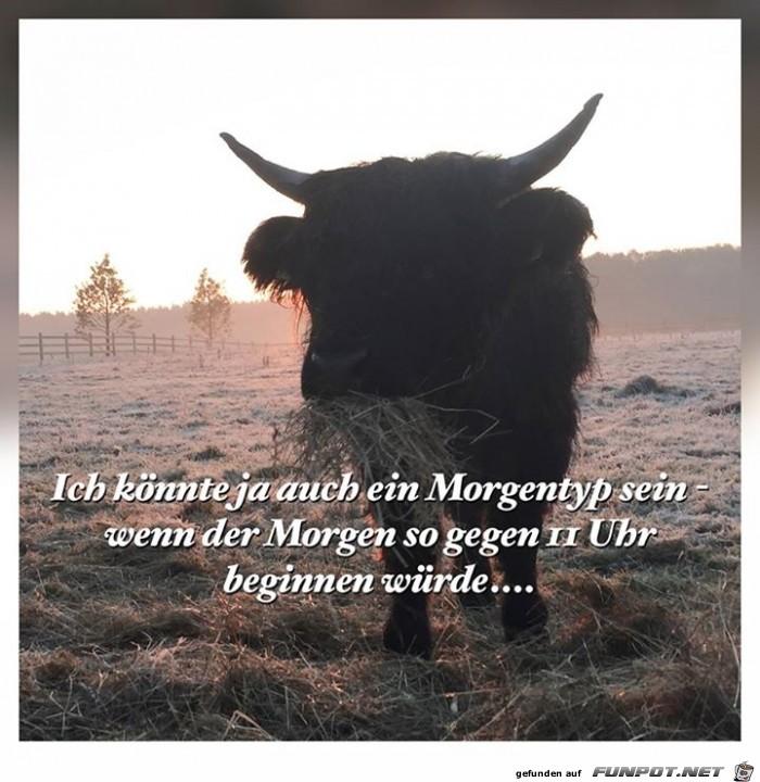 morgentyp