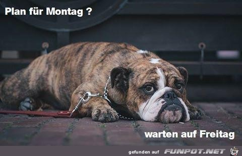 Plan fuer Montag