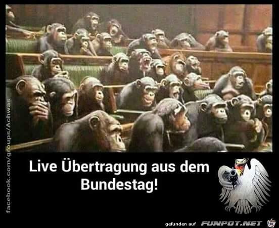 Live aus dem Bundestag