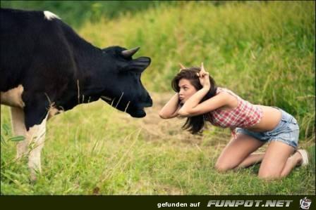 eine kuh macht muh