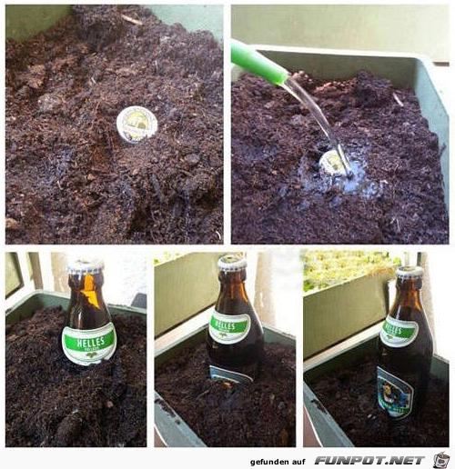 Jetzt anbauen - im Sommer ernten