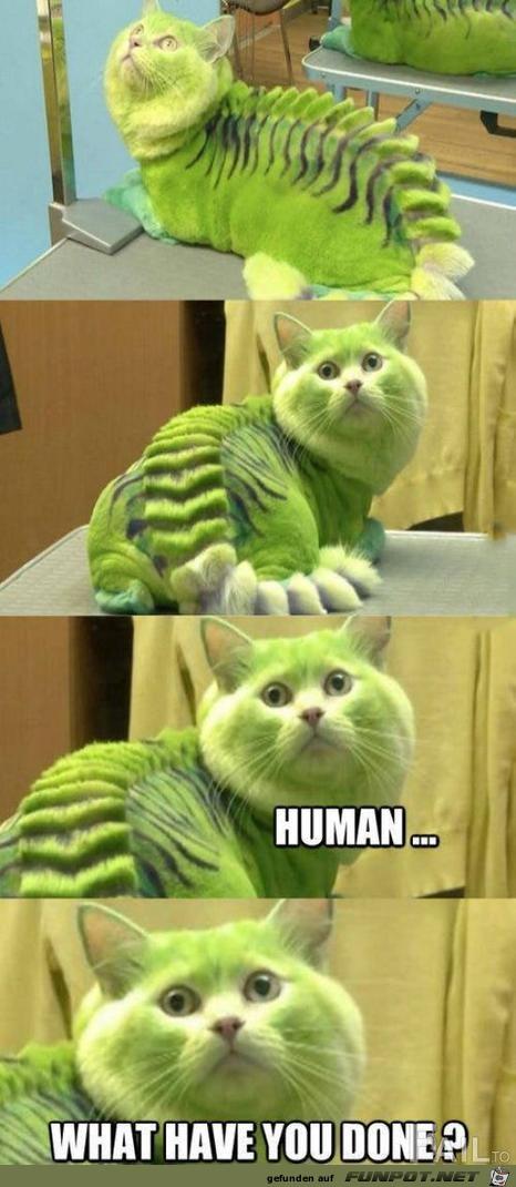gefärbte Katze