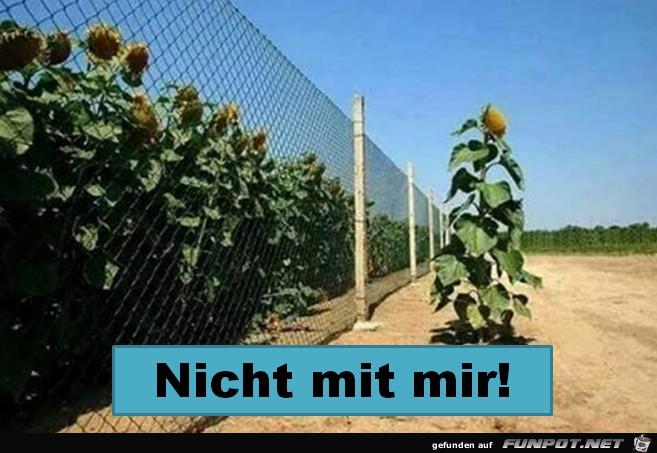 Der Zaun interessiert mich nicht