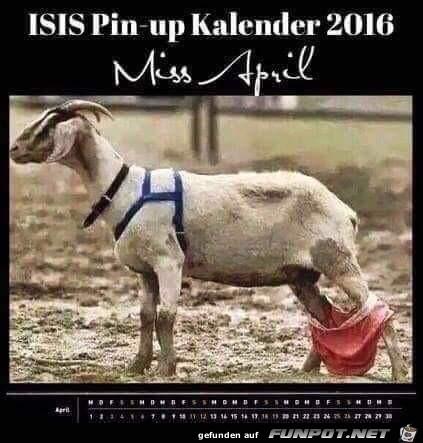 ISIS Pin up Kalender
