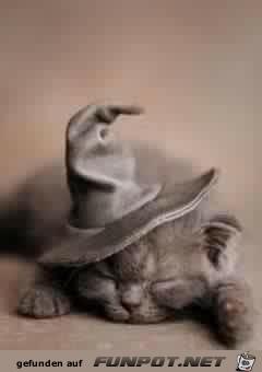 Süße Halloweenkatze