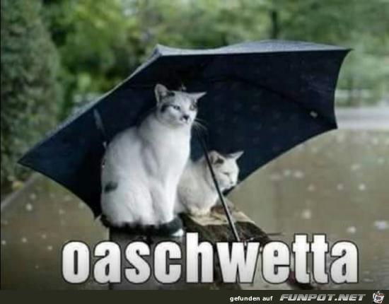 oashwetta