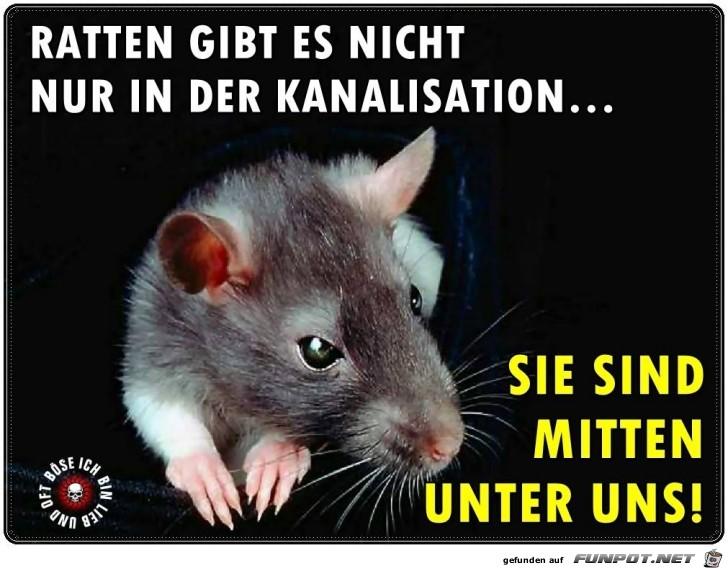 Ratten gibt es nicht