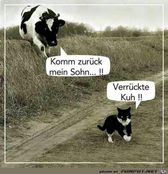 verrückte Kuh....