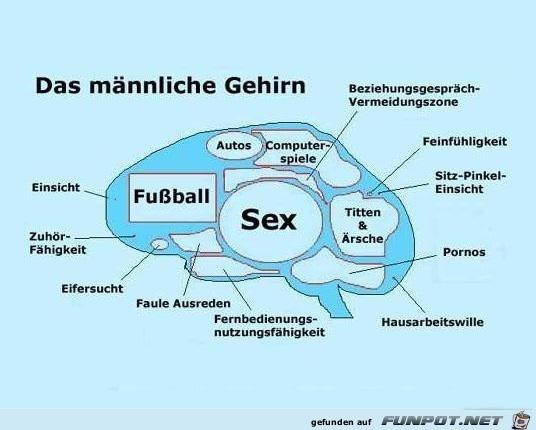 das-männliche-Gehirn.....jpg auf www.funpot.net