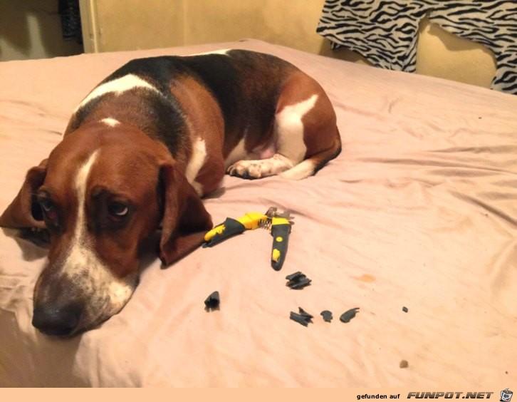nicht-ganz-unschuldige-Hunde-1
