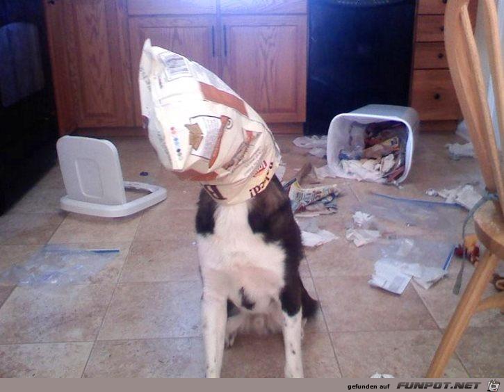 nicht-ganz-unschuldige-Hunde-16