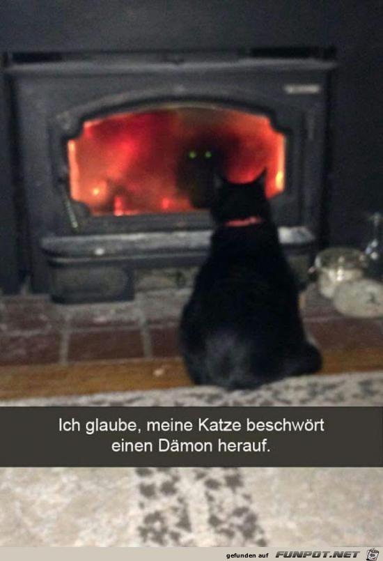 Katzen-Mission