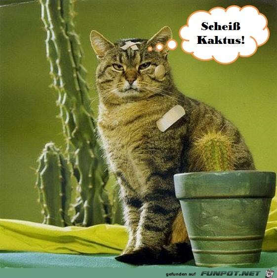 Dämlicher Kaktus