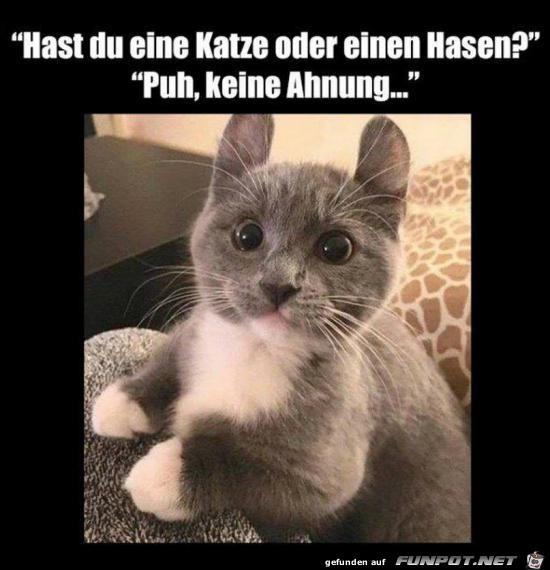 Hase oder Katze