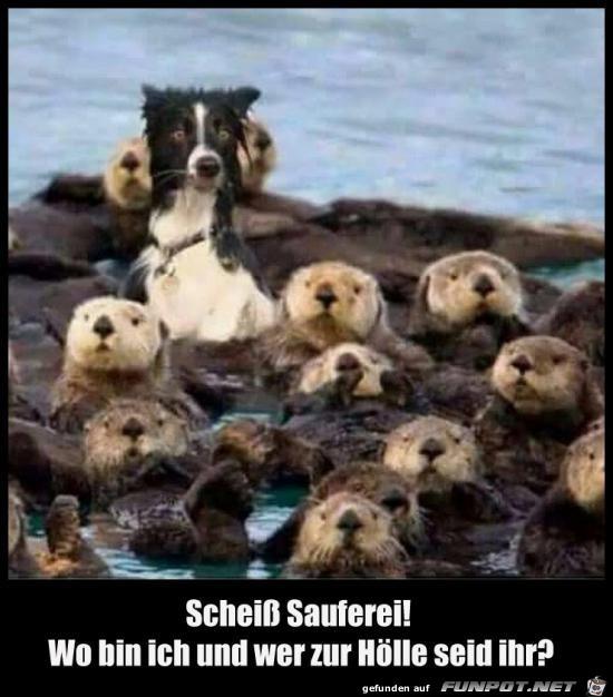 scheiss Sauferei......