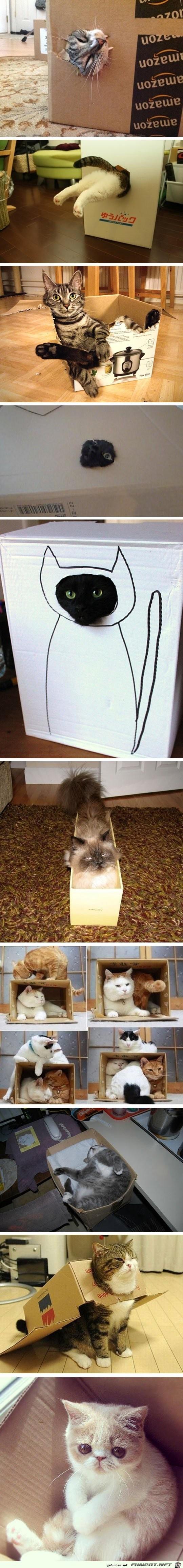 Katzen lieben Kartons