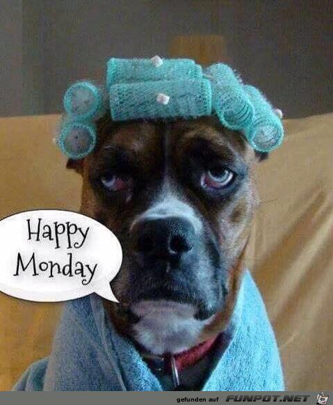 Schönen Montag